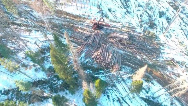 Незаконная вырубка: с губителями лесов будет бороться государство