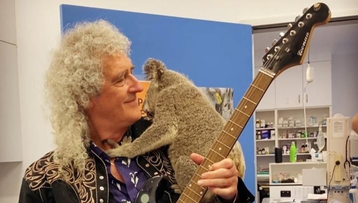 Гитарист Queen сыграл для коалы, выжившей в пожаре