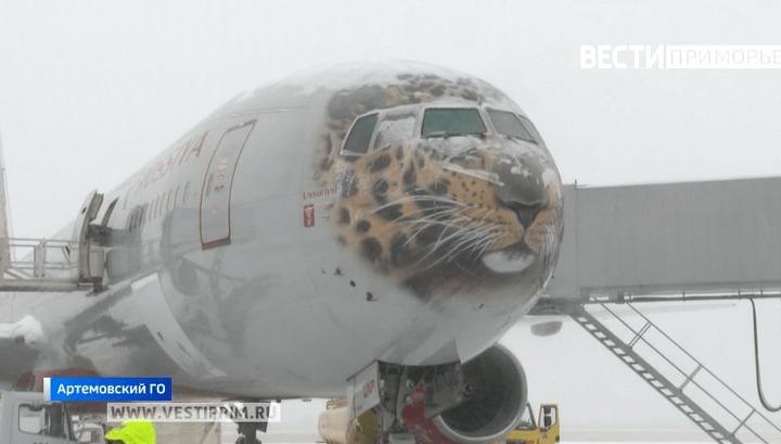 远东豹被送到莫斯科进行手术