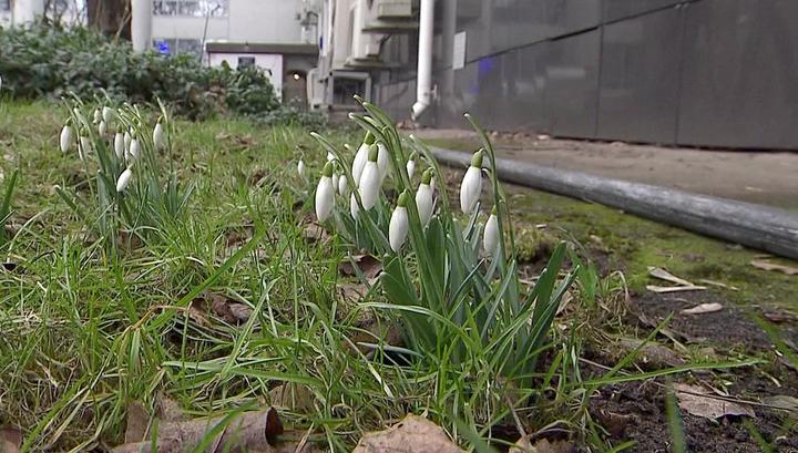 Когда придет настоящая весна: прогноз метеоролога