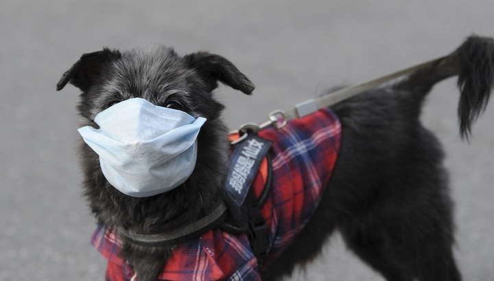 коронавирус у щенка симптомы