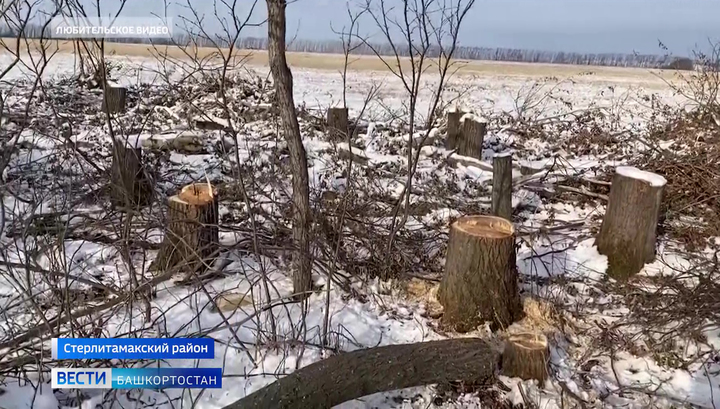 Бюджетное финансирование проекта сохранения лесов в России сократят на 33%