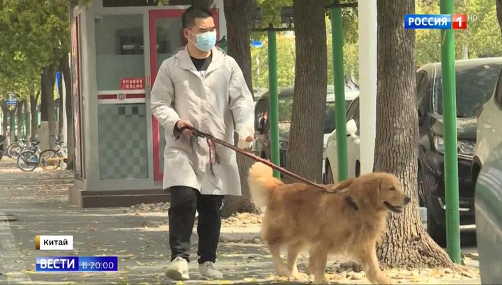 Домашних животных могут отправлять на карантин из-за коронавируса