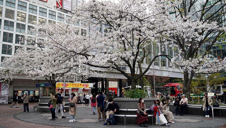 В период цветения сакуры непогода отправила токийцев по домам