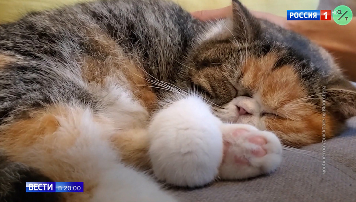 Собаки более устойчивы к коронавирусам, чем кошки