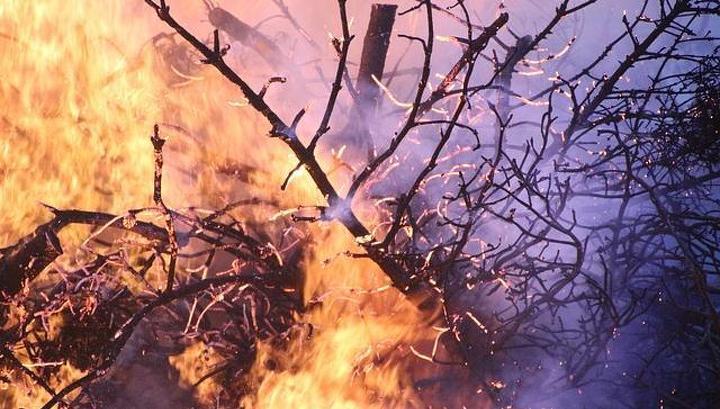 В Бурятии потушили пять лесных пожаров