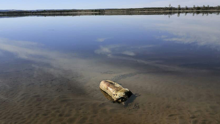 На берегу Амура обнаружили трупы животных