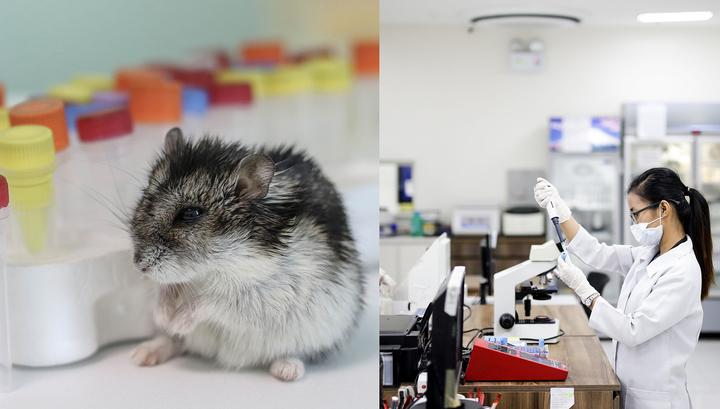 Хомяки помогли доказать эффективность медицинских масок в борьбе с COVID-19