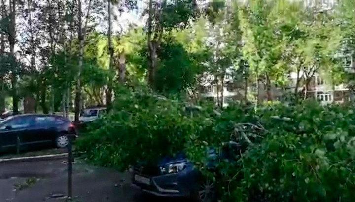 В Свердловской, Тюменской и Курганской областях разгулялась непогода