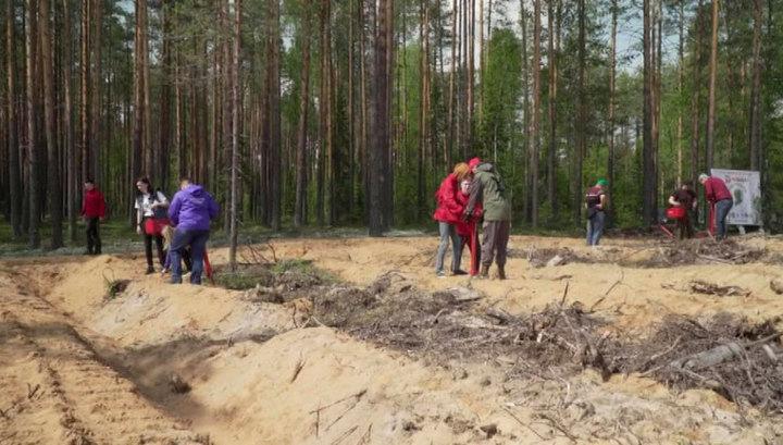 """В рамках акции """"Сад памяти"""" в Коми высажено девять тысяч юных сосенок"""