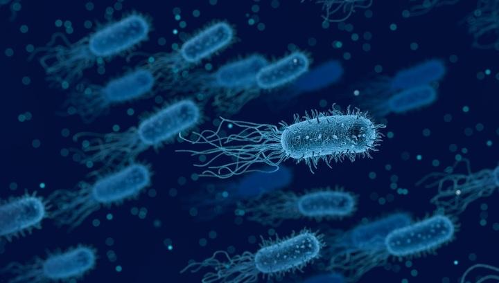 xw 1818192 - Российские биологи нашли эффективное средство против супербактерий