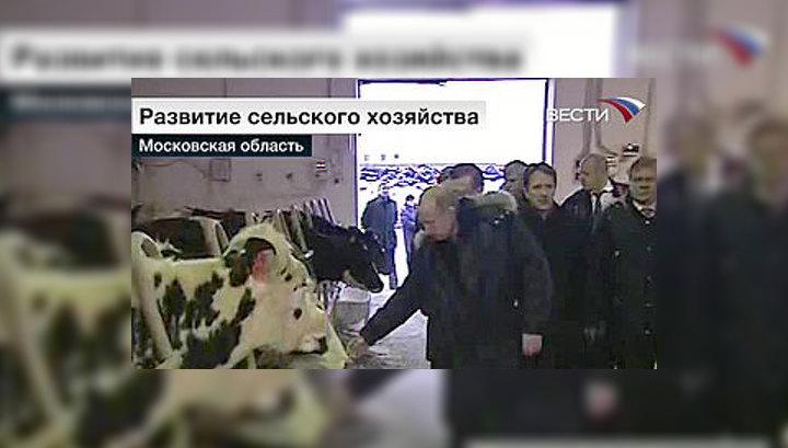 Путин побывал на молочной ферме в Одинцове