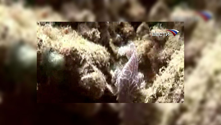 У берегов Индонезии обнаружен неизвестный науке вид рыб
