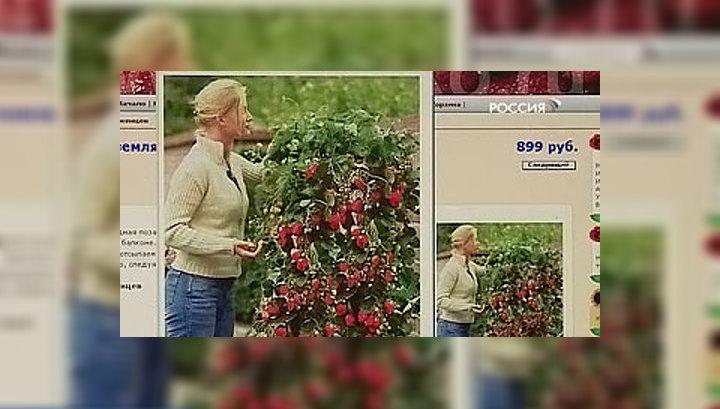 Огородников обманывают несуществующими растениями