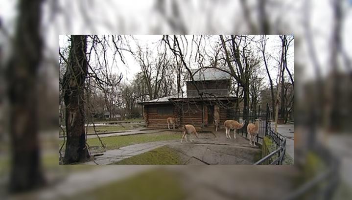 Обитатели калининградского зоопарка пострадали от бродячих собак