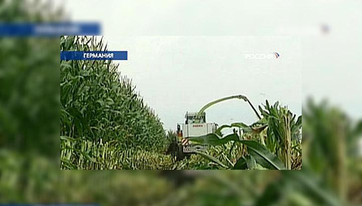 Германия запрещает генно-модифицированную кукурузу