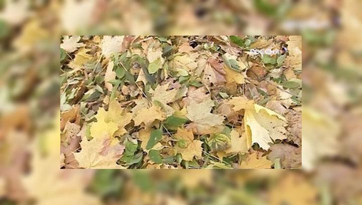 Тотальная уборка опавшей листвы убивает московскую землю
