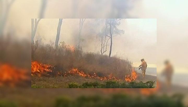 Пожары уничтожили в Австралии 6 тысяч гектаров леса