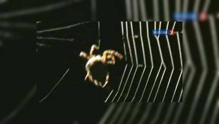 """Врачи учатся у пауков """"латать"""" организм"""