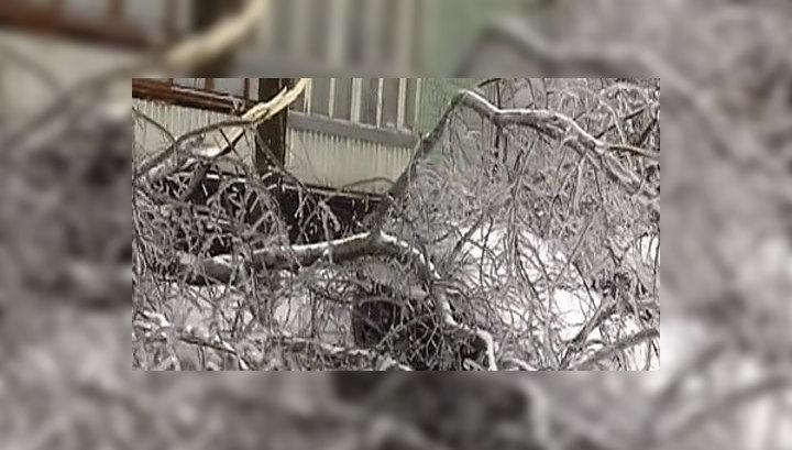 В Москве от упавших деревьев пострадали 27 человек