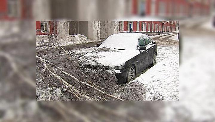 В Москве продолжают падать обледеневшие деревья