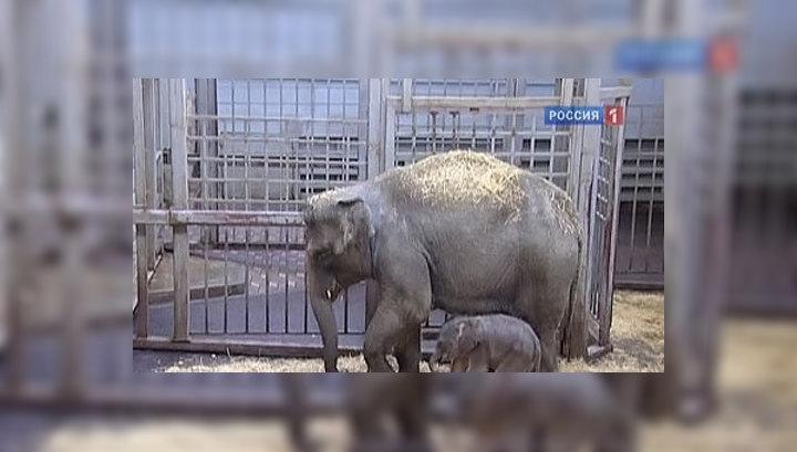 """Ростовскому зоопарку достался """"лишний"""" слонёнок"""