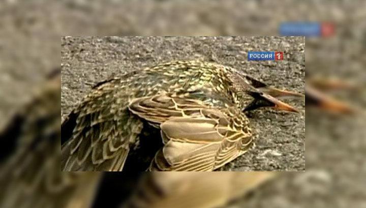 Массовая гибель птиц: химическое оружие или кара Господня?