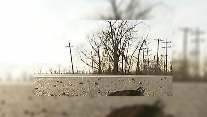 Дождь из мертвых птиц обрушился на Италию