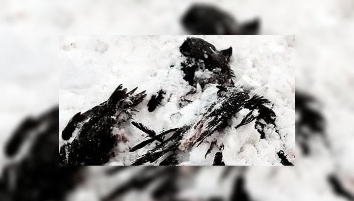 В Турции массово гибнут птицы