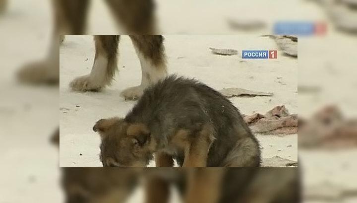 """Бездомных собак депортируют в один большой """"приют"""""""