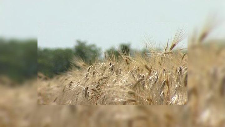 Эксперты: несмотря на засуху, ситуация с зерном далека от критической