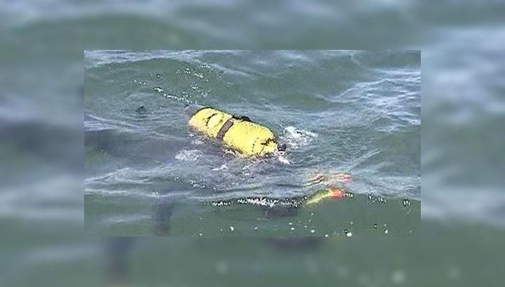 Акулий ажиотаж: хищниц в Приморье обвиняют даже в нападении на медведя