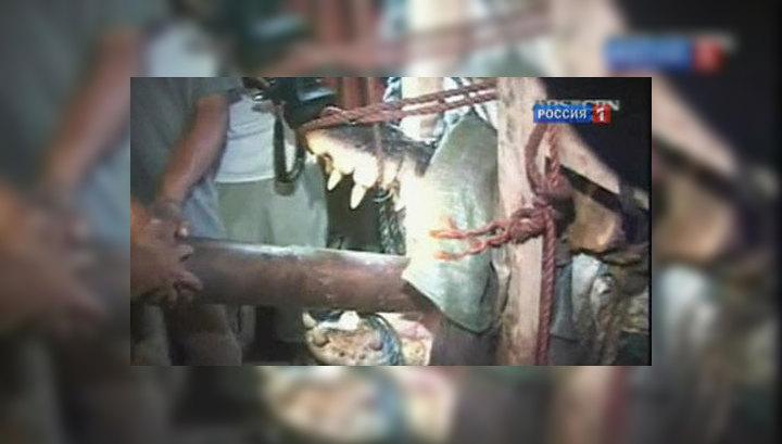 На Филиппинах поймали крокодила-гиганта