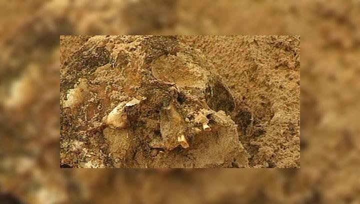 Черные копатели уничтожили древнее захоронение