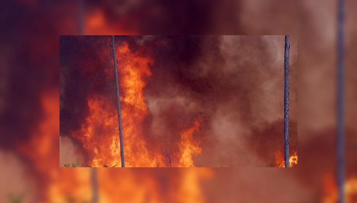 Число лесных пожаров в Сибири удалось сократить