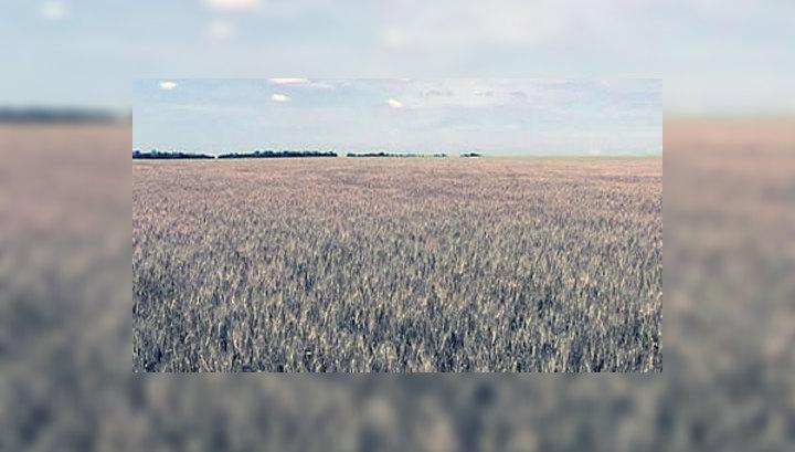 В Ростовской области из-за засухи гибнет урожай