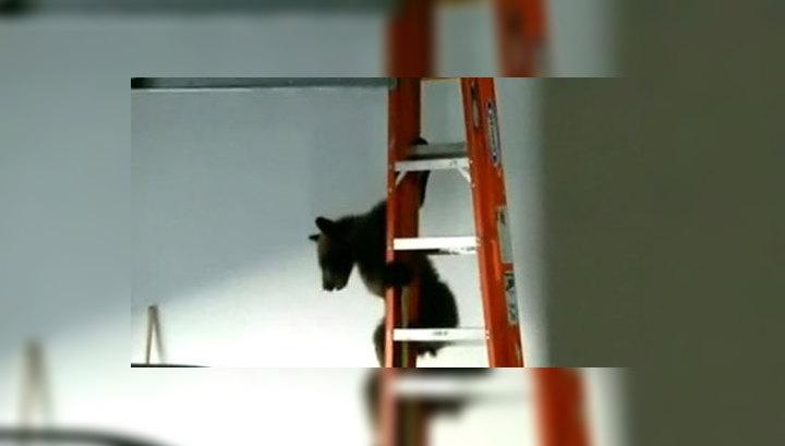 В гараж жительницы Калифорнии забрался медвежонок
