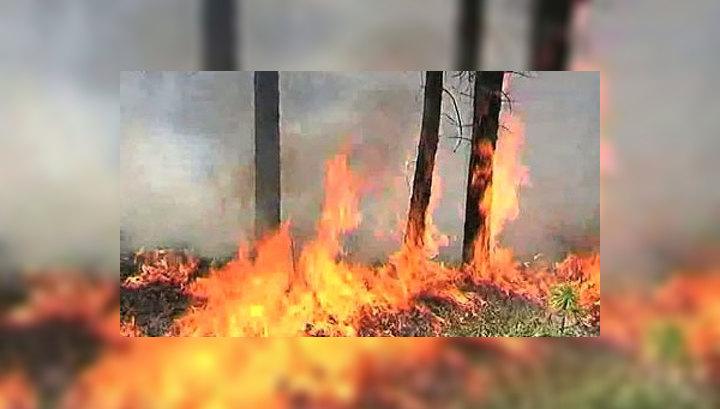 На Дальнем Востоке ликвидировано 12 из 66 таежных пожаров