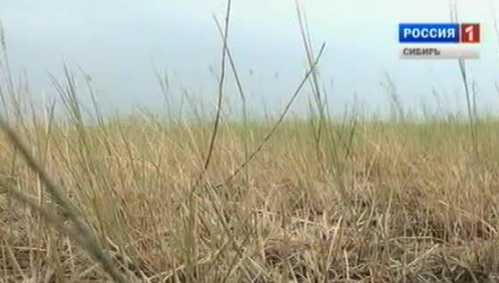 Засуха в Алтайском крае уничтожает посевы