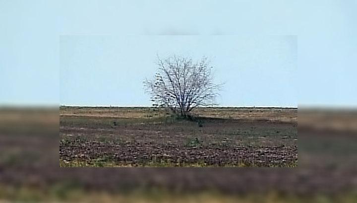 Засуха в Саратовской области: фермеры подсчитывают убытки