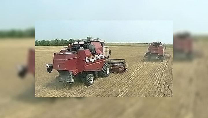 По регионам России прошлась засуха: урожая не будет