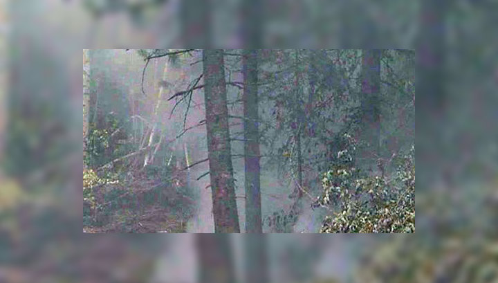 В Томске самолеты приступили к тушению пожаров