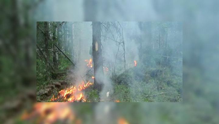 Россия изнывает от пожаров и засухи
