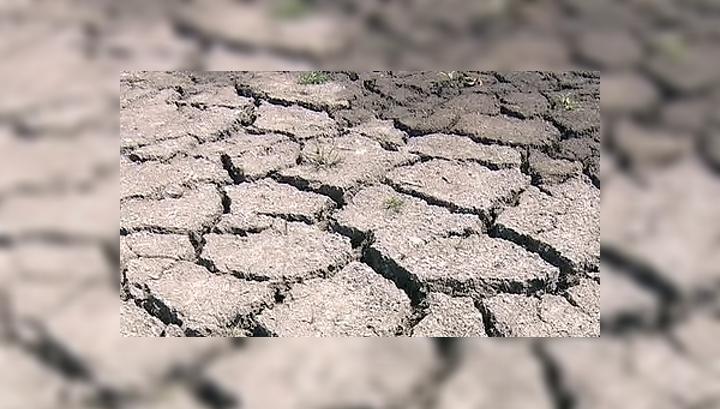 Засуха в США: из 15 штатов, объявленных зоной бедствия, хуже всего пришлось Айове