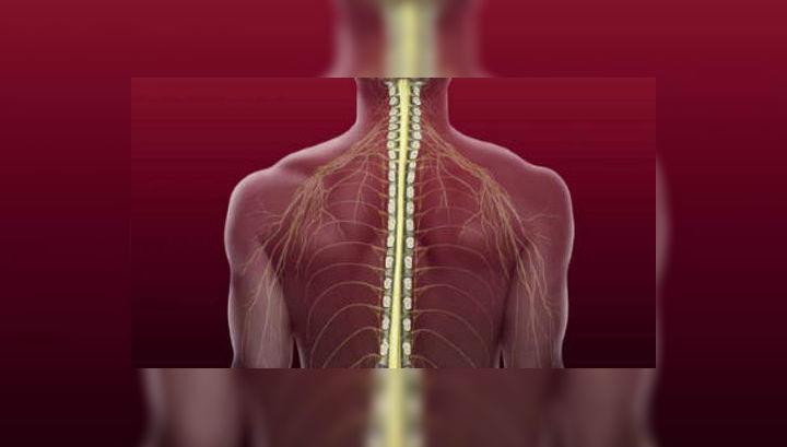 Исследователи из американского центра StemCells уверяют, что нейронные стволовые клетки способствуют возвращению чувствительности тканей после травм спинного мозга