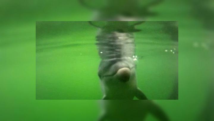 Боевые дельфины будут патрулировать акваторию и уничтожать диверсантов