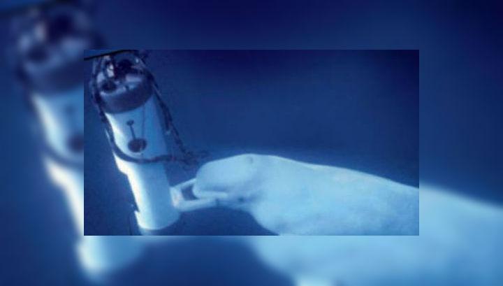 """Учёные научили Нока """"говорить"""" в специальный подводный микрофон"""