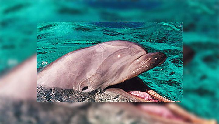 В западноафриканском государстве Кабо-Верде три сотни дельфинов выбросились на берег и погибли после захода в местный порт американской подлодки.
