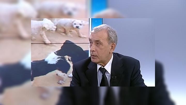 Эксперт: убийца животных - потенциальный убийца людей