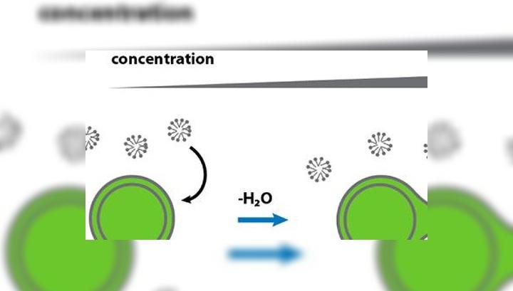 """При увеличении концентрации сгустки жирных кислот образуют вытянутые трубочки, которые в свою очередь разделяются на """"дочерние"""" капли"""